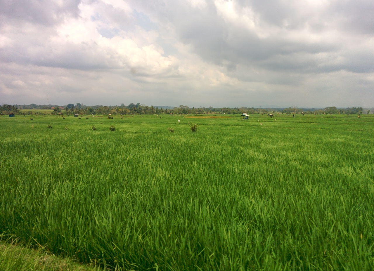 Green Fields, Bali