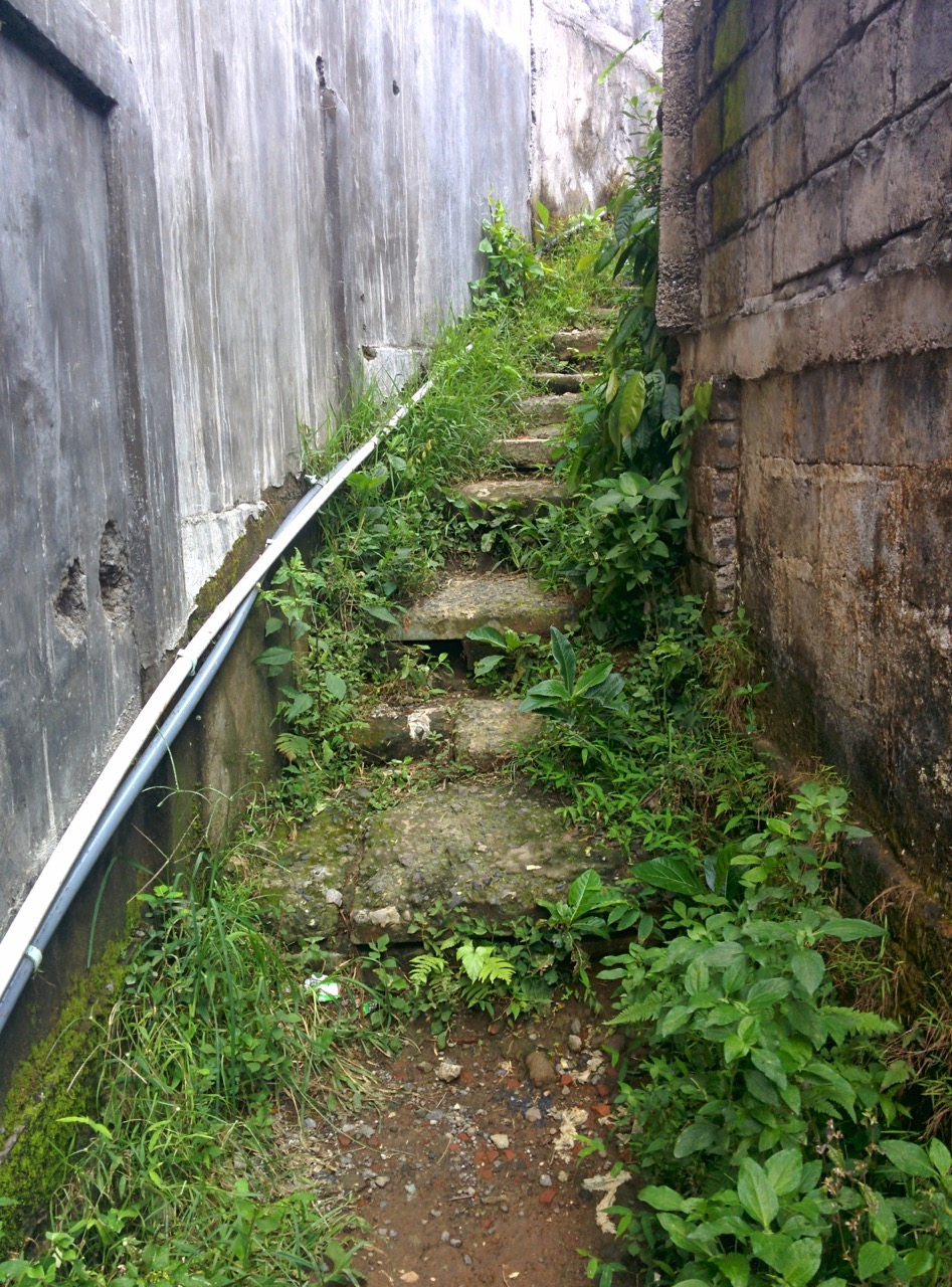 Stairway to rice fields, Ubud